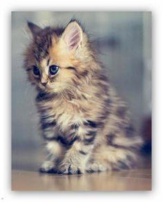 Kitty, kitty...