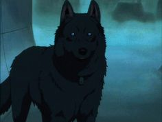 Arctic Wolf with Blue Eyes | Nakito (Fae) ~Black she-wolf with cold sapphire blue eyes. Vicious and ...