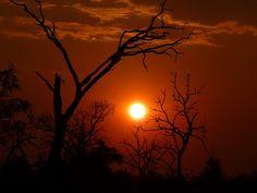 Beautiful. Chobe National Park sunset, Botswana.