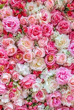 'Pink Red Roses Romantic Floral Print' Photographic Print by newburyboutique - Aesthetic - Blumen Exotic Flowers, Pretty Flowers, Pink Flowers, Colorful Flowers, Summer Flowers, Yellow Roses, Cut Flowers, Dried Flowers, Fresh Flowers