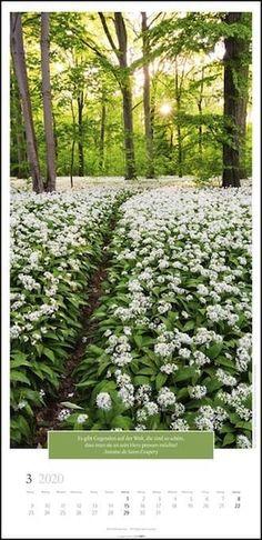 Traumhafte Wege Vertical Kalender 2020 - KV & H Thalia, Plants, Calendar, Planters, Plant, Planting