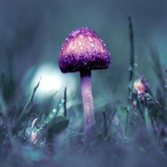 Solitude. #Purple #mushroom