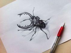 #scarab #beetle #draw #drawing #methodminh
