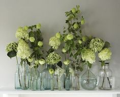 Small floral arrangements and single stems make a beautiful statement in bud vases. Bud vases are simple, elegant and incredibly versatile. - check out these 10 ways to use bud vases today! Green Hydrangea, Green Flowers, White Flowers, Purple Hydrangeas, Flowers Uk, Flower Colors, Simple Flowers, Glass Flowers, Green Plants