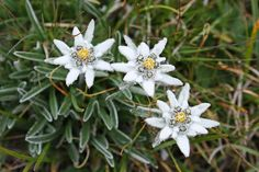 How to design the rock garden - planning tips Alpine Flowers, Alpine Plants, Decor Logo, Japanese Flowers, Garden Of Eden, Small Flowers, Poinsettia, Garden Planning, The Rock