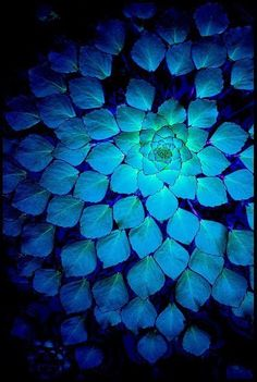 Maybe I need some input. Blue flower, Water Chestnut or Water Caltrop.. People seem to really love this pin, in only about 2 months, it's been repinned from my board 61 3 TIMES! What is the magic in this pretty pic? Lol!
