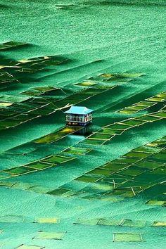 Indrasarobar lake, Nepal. Mohan Duwal