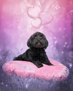 Un amour de chien amoureux - Image trouvée chez MA DOMIE...