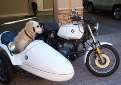 79 BMW R65 w/ sidecar. $4300. The dog was not included, so I had to pass. ;-)
