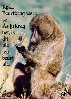 Check out what these animals with look like with cell phones in their natural environment African Jokes, Cell Phone Picture, Afrikaanse Quotes, Basic Tools, Primates, Good Morning Quotes, Brown Bear, Picture Photo, Monkey