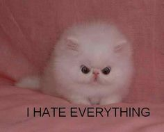 This is how I look on the inside when I get mad. I really don't hate everything.