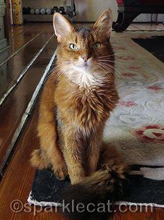 Vote for Winging Cat Rescue!