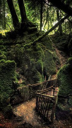 Puzzlewood near Coleford in the Forest of Dean - Gloucestershire, England
