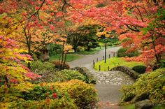 11 places to see fall leaves in Washington   Seattle.Local Mom Blog