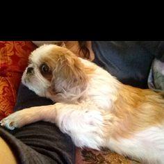 Dori the dog, my lovely little bro