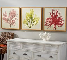 Framed Coral Prints - Coral #potterybarn Guest Room?