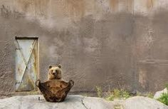 Google Image Result for http://ngm.nationalgeographic.com/visions-of-earth/img/0511-finland-brown-bear-714.jpg