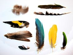 """ffffffound: """" Things Organized Neatly """" """" ed: recognize. Watercolor Feather, Feather Art, Bird Feathers, Yellow Feathers, Colorful Feathers, Blue Feather, Things Organized Neatly, Hope Is The Thing With Feathers, Art Drawings"""