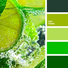 color matching, color of the year according to Pantone, dark green, green, green color, greenery, light green, lime, lime color, Pantone color 2017, shades of light-green, shades of lime, shades of lime color, the color of young greenery.