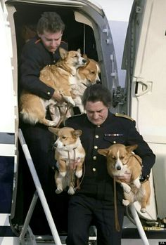Queen's Corgis traveling in style