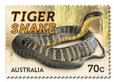The Things that Sting stamp issue for this year's Stamp Collecting Month… Australian Plants, Australian Animals, Australian Icons, Reptiles, Australia Tattoo, Tiger Skin, Buy Stamps, Tattoo Illustration, Stamp Collecting
