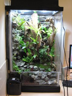 Talk about inspiration! A fully customized 60 gallon vivarium for dart frogs made using foam and underlayment cement