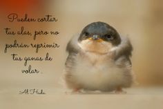 Islam; Frases; Dichos; Pájaros; Alas; Fuerza Islam, Smile Quotes, Osho, Cute, Pictures, Animals, Truths, Cattle, Strength