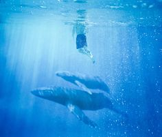 Open waters by Stephen Criscolo, via Flickr