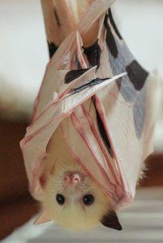 sloth unleashed
