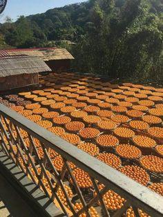 俯視曬場(味衛佳柿餅觀光農場)