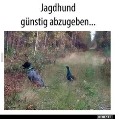 Tierischer Humor, Life Slogans, Dogs For Sale, Hunting Dogs, Animal Crossing, Funny Animals, Funny Memes, Harry Potter, Funny Pics