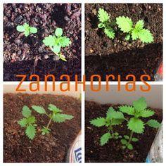 Evolución del huerto   Plantas Plantar, Vegetable Garden, Flower Pots, Friday, Photos, Friends