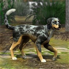 Catahoula Leopard Dog by LittleV - The Exchange - Community - The Sims 3