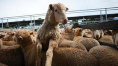 Torino spiritualità riflette sul nostro rapporto con gli animali - La Stampa