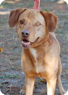 Pictures of Rocky a Hound (Unknown Type) for adoption in Cherry Hill, NJ who needs a loving home.