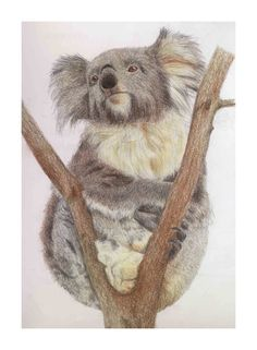 Koala by one-last-caress - drawing