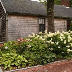 Belgian block frames a shade-tolerant border composed of 'Anabelle' hydrangeas, hostas, and ferns. | Photo: Nancy Andrews | thisoldhouse.com