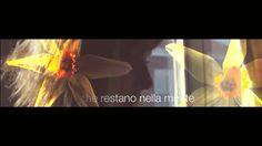 Video presentazione Starlight  #cdj #degradejoelle #starlight