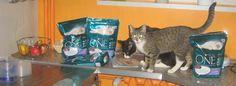 Moje kotki wszystko dokładnie obwąchały, a Simba nawet ulotki przeczytał. #kampaniapurinaone  https://www.facebook.com/photo.php?fbid=652374821471591&set=p.652374821471591&type=1