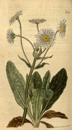 v.50 (1822-1823) - Curtis's botanical magazine. - Biodiversity Heritage Library 457 x 820