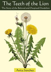 This most common of plants is now a despised weed, but it wasn't always that way. Dandelions were once a valued commodity.