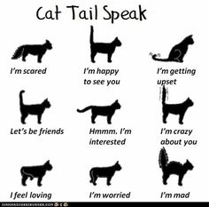 """""""Cat Tail Speak"""" from Fun Cat Facts #81...*I remember that my sweet Buffy did the """"Crazy about you"""" tail a lot and I thought it was funny...now I miss it.  CLICK to see all 100 Fun Cat Facts...VERY INTERESTING!"""