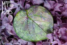 Фотография Plant Leaves, Photo Wall, Plants, Photograph, Plant, Planets
