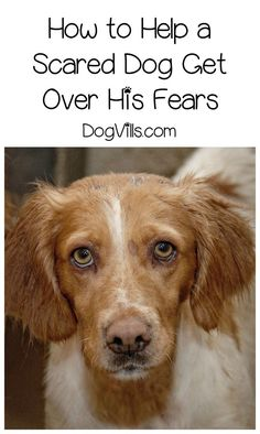 How do you ease dog fears, especially when they seem so illogical? Check out our dog training tips to help Fido stop being such a scaredy cat! Puppy Training Tips, Training Your Dog, Pet Dogs, Dogs And Puppies, Doggies, Dog Health Tips, Stop Animal Cruelty, German Shorthaired Pointer, Dog Behavior