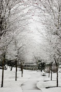 Seattle snow in January 2012 - love it whilst we're sweltering away in Aus!