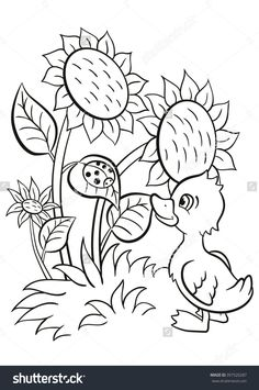 Coloring Pages Little Cute Duckling Stands Near The Sunflowers And Looks At Ladybug