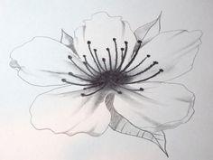 How To Draw A Cherry Blossom