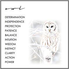 Owl Symbolism