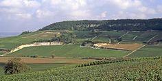 Côte des Blancs CIVC (803×402) Vineyard, Champagne, Outdoor, Landscape, White People, Vine Yard, Outdoors, Outdoor Games