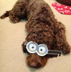 Check out this furry Minion!